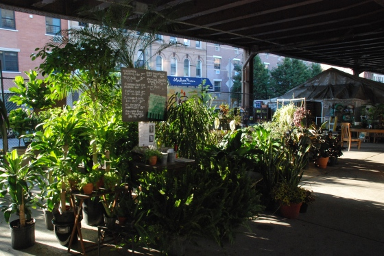 East Harlem Urban Garden