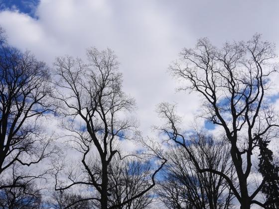 a sky beckons