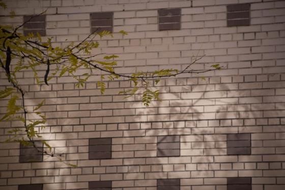 fleeting light