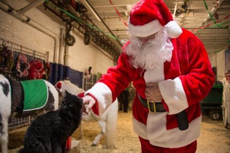Santa and the cat