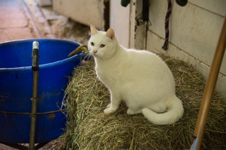 Chateau Stable Cat