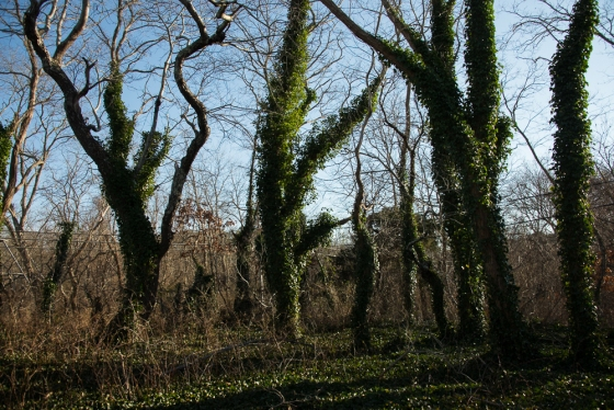 Winter Trees, Dancing Eastham, MA Cathy Stewart
