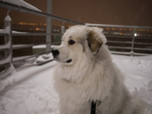 Samantha Acquiline in her element---snow