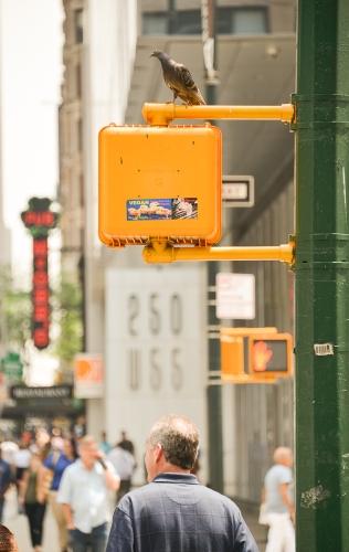 Waiting at the Crosswalk Cathy Stewart